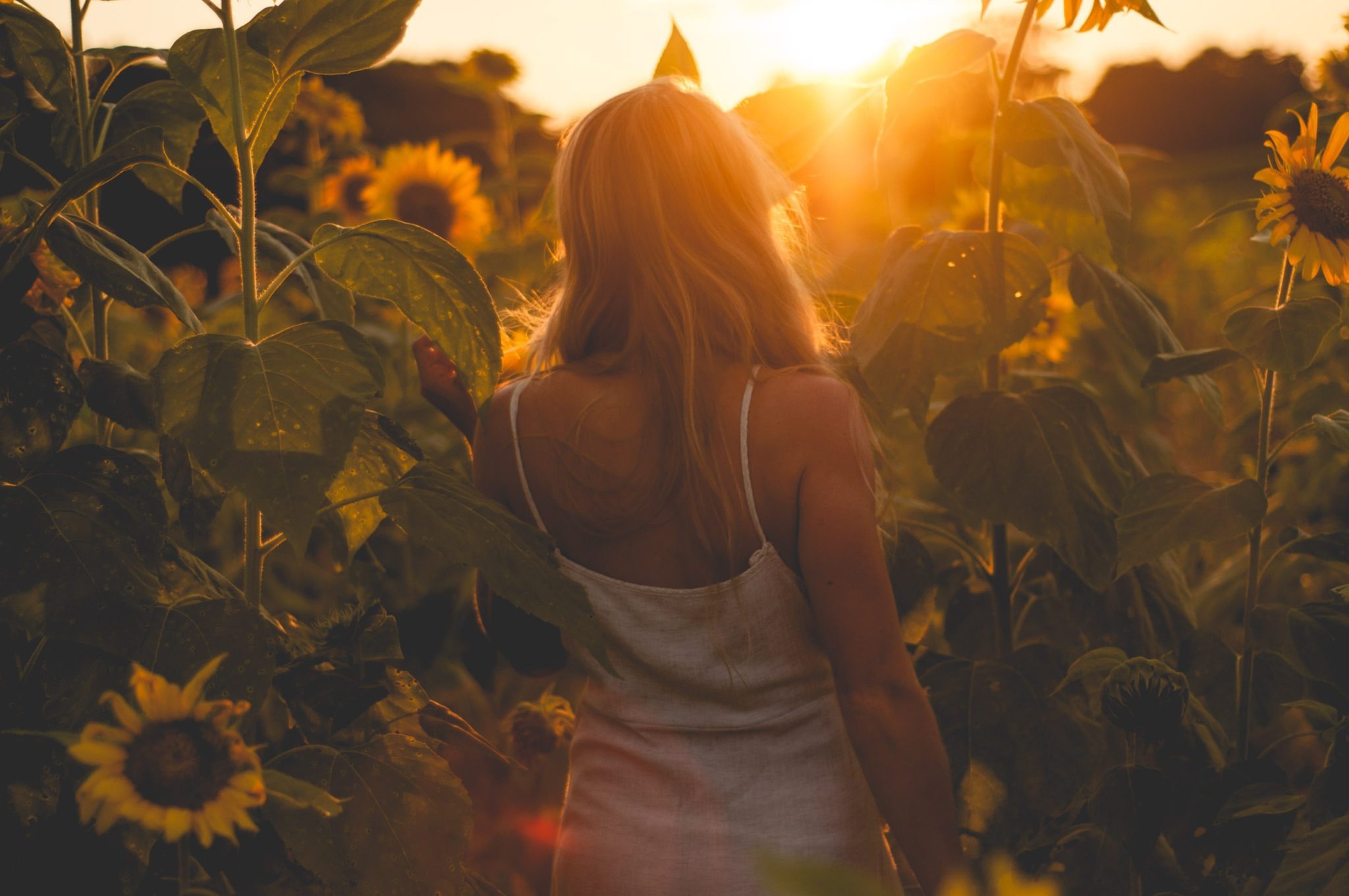 Megan Rae walking into the Sunflower field in golden light